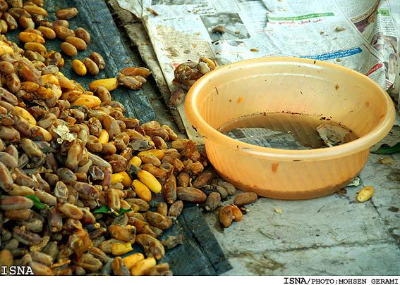 بسته بندی حبوبات در مازندران این عکس ها را ببینید. دیگر خرما نخورید!